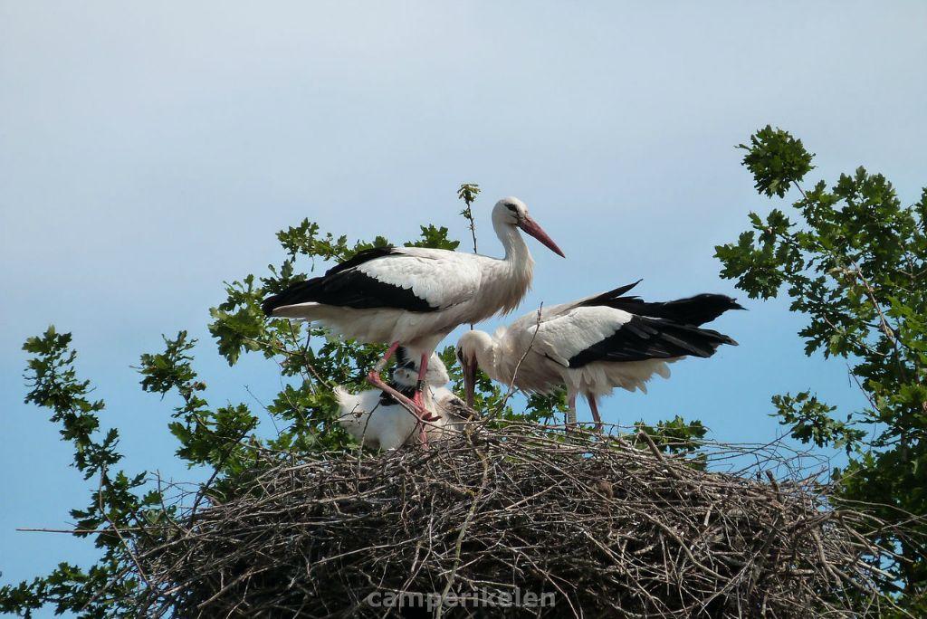 Ooievaars bij vogelpark Villars les Dombes
