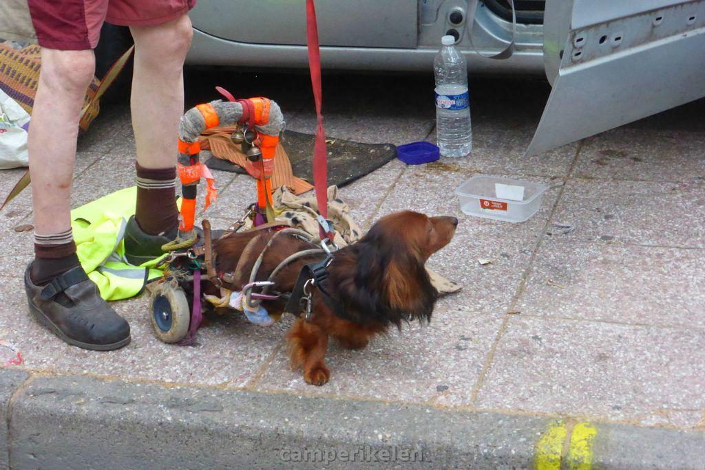 Hond op wieltjes