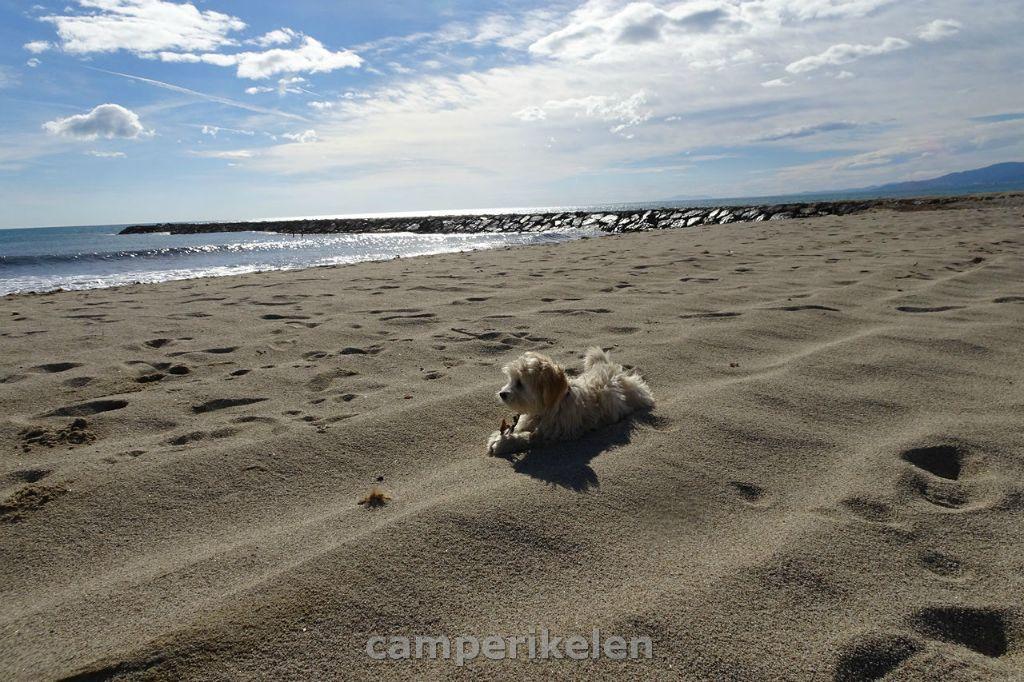 Yara op het strand