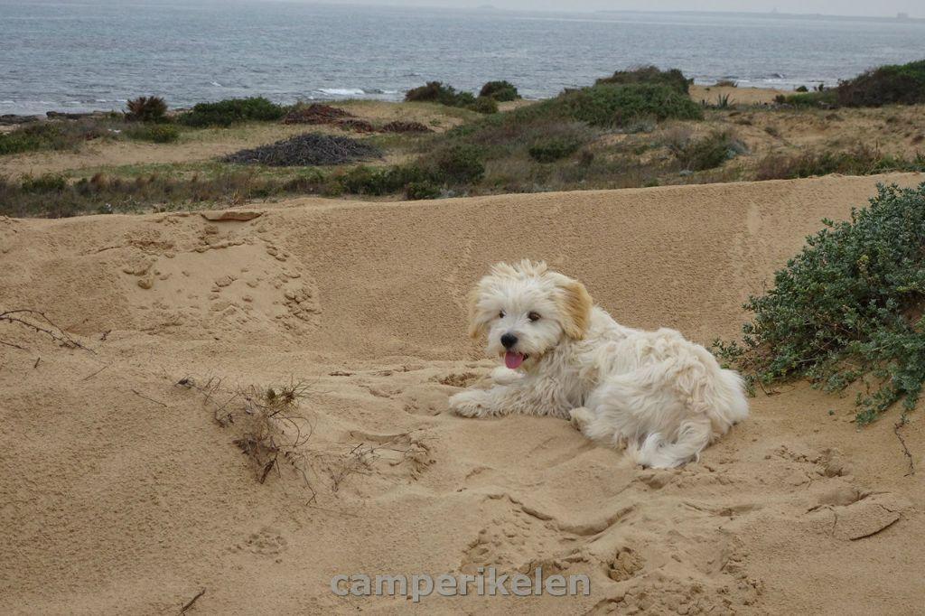 Lekker spelen in de duinen
