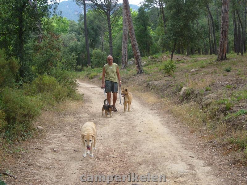 Wandelen met de honden van het asiel