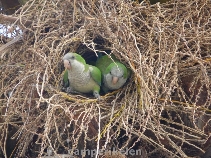Vogeltjes in de bomen