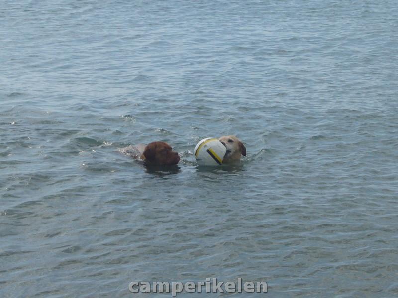 Trisha gaat zwemmen met een vriendje
