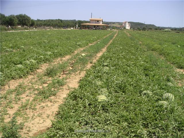 Meloenen op het land