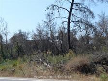 Afgebrande bossen