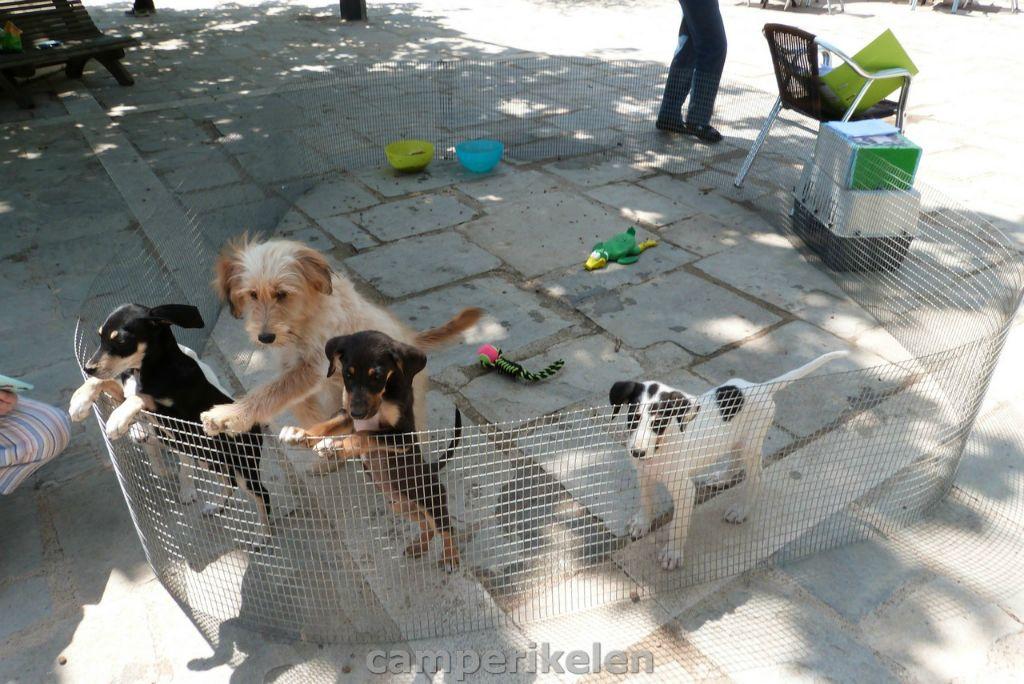 Puppy opvang van het asiel