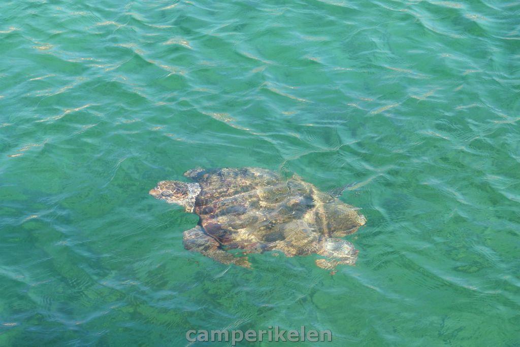 Water schildpad