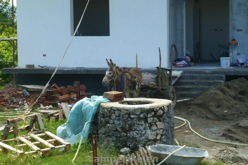 Verbouwen en een werkezel