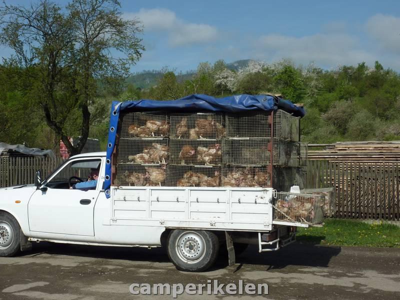 Kippen verkopen
