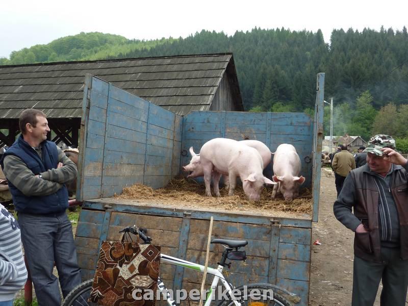 Levende markt in Năsăud