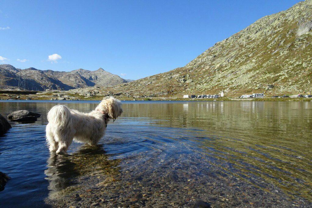 Pootje baden op de St. Gotthardpass